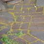 """patio 3"" (<a href='/inquire.php?gallery=wallrock&file=patio_1.jpg&caption=patio 3'>Inquire about this piece</a>)<br />info: flagstone mosaic<br />price: negotiable"